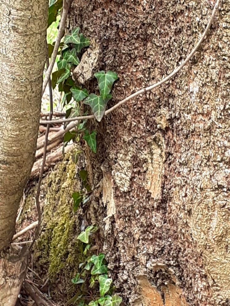 Berušky v přírodě