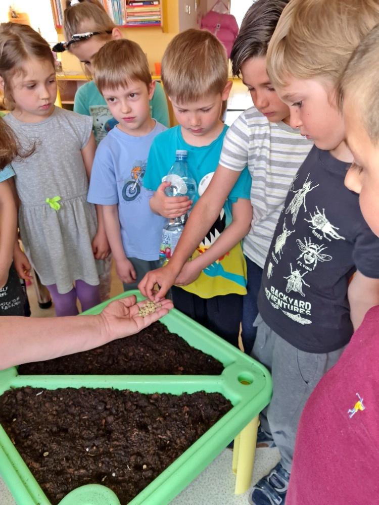Motýlci jako zahradníci